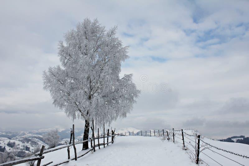 Strada rurale nelle montagne durante l'inverno immagini stock libere da diritti
