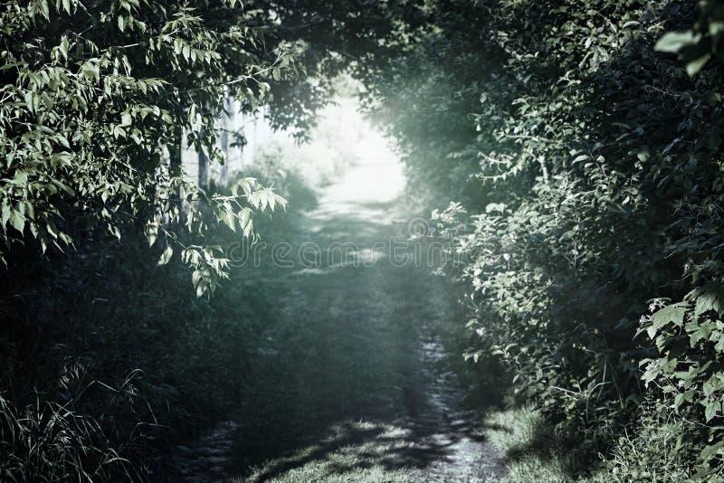Strada rurale stretta in foresta fotografie stock