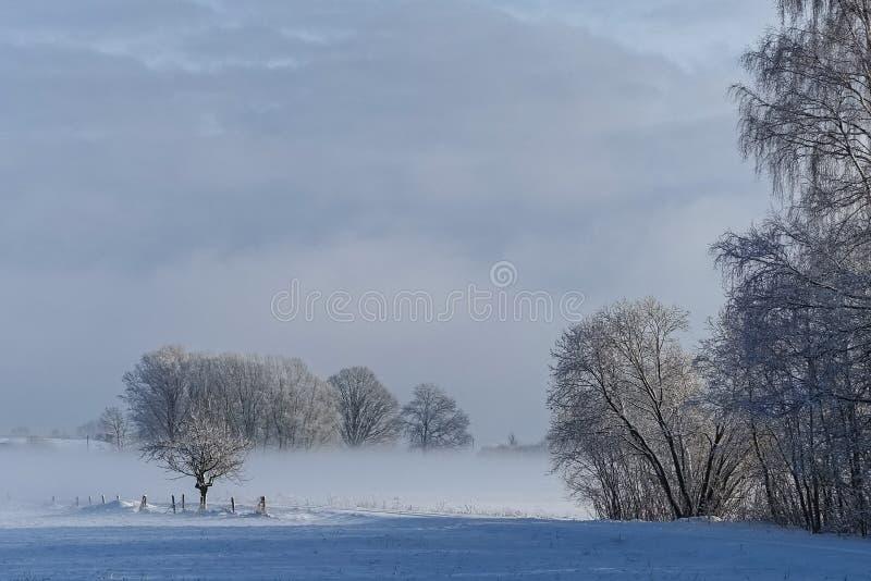 Strada rurale vuota lungo il bordo della foresta nell'inverno fotografia stock libera da diritti