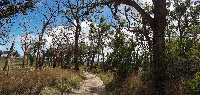 Strada sabbiosa scenica alla vecchia azienda agricola Vicolo di vecchi alberi curvati Vista panoramica, fotografia stock