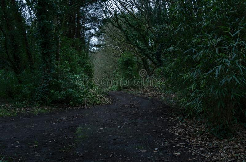 Strada scura nella foresta con vegetazione/fotografia morte di una foresta verde scuro con le ombre basse immagine stock