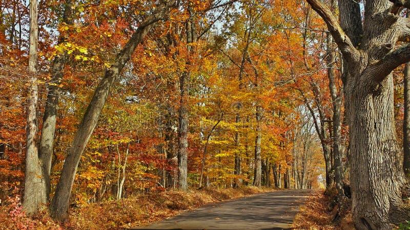 Strada secondaria scenica di caduta nella contea di Bucks, Pensilvania fotografia stock