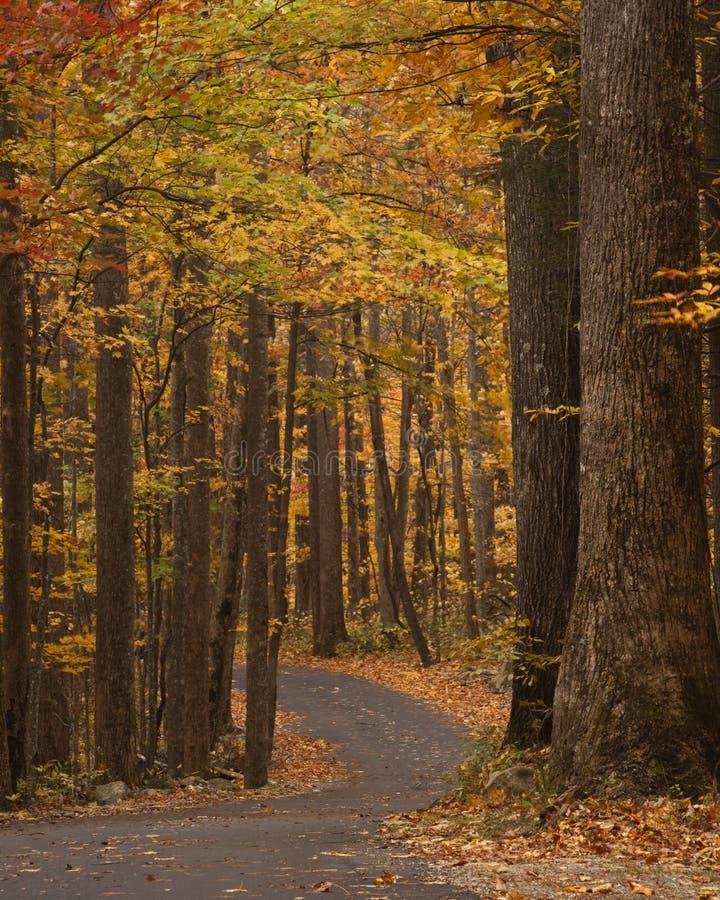 Strada a senso unico d'avvolgimento all'autunno fotografia stock