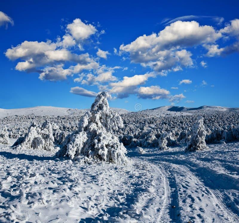 Strada Snowbound in una foresta fotografie stock libere da diritti