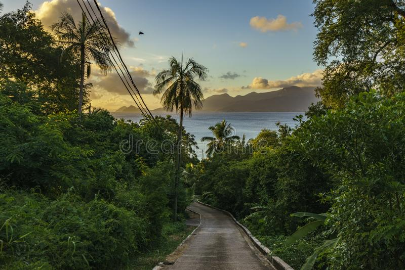 Strada sola nella giungla, Seychelles 1 immagine stock