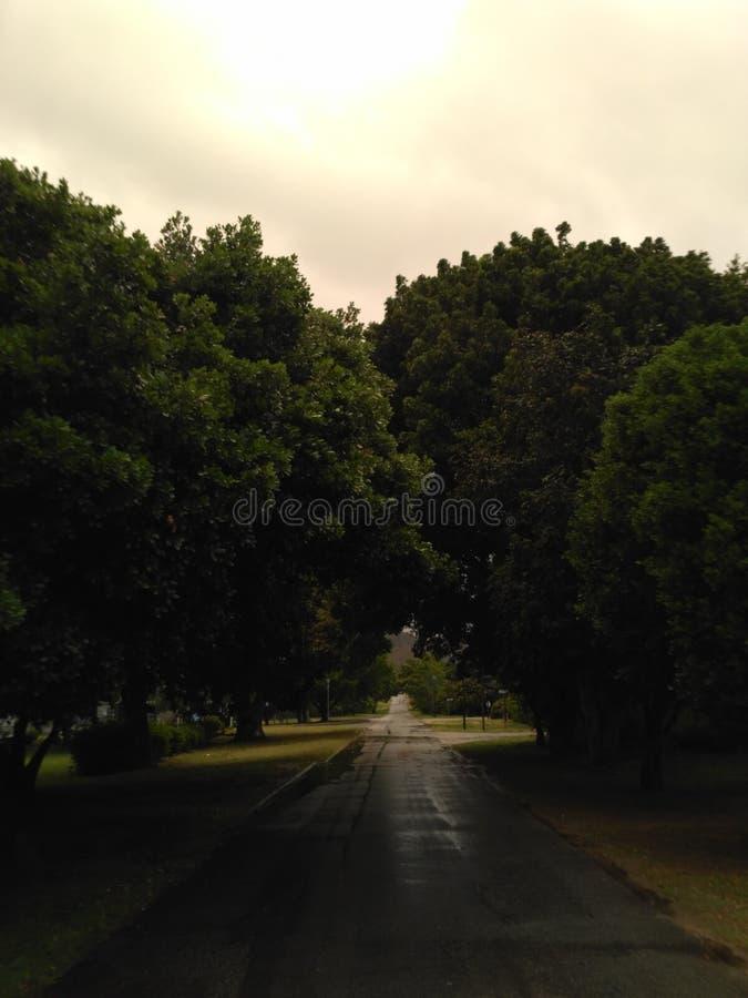 Strada sotto gli alberi fotografia stock
