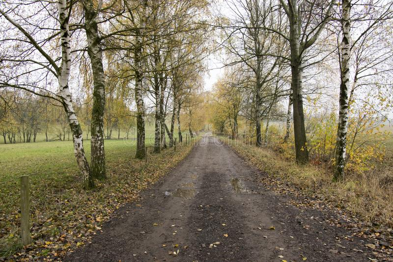 Strada sporca in tempo piovoso di autunno, vicolo della betulla in Chotebor fotografie stock