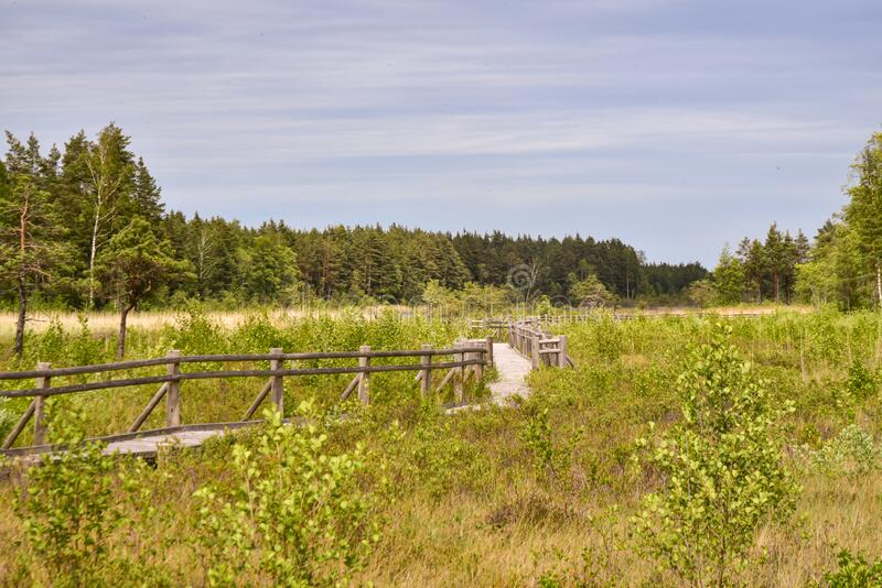 Strada su un prato di una foresta paludosa fotografia stock libera da diritti