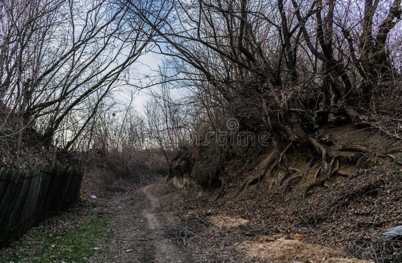 Strada sulla foresta fotografia stock libera da diritti