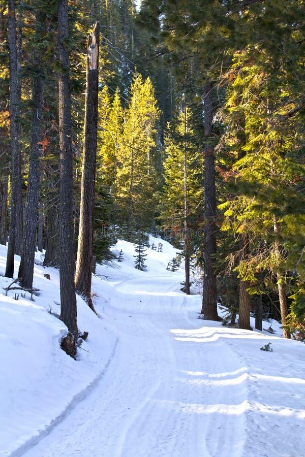 Strada Sunlit di inverno in foresta immagini stock libere da diritti