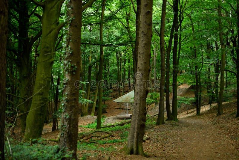 Strada trasversale del percorso della montagna di Tecklenburger in mezzo agli alberi di faggio immagine stock