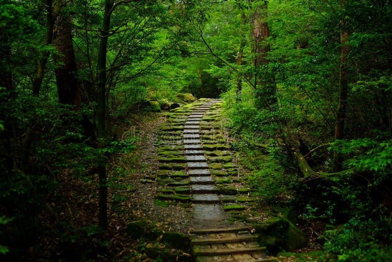 Strada in una foresta fotografia stock libera da diritti