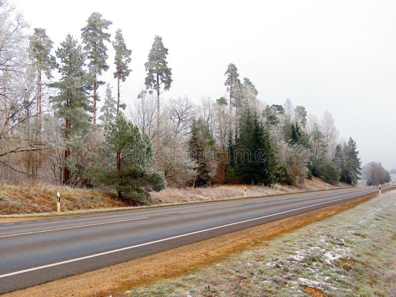 Strada vicino alla foresta, Lituania immagini stock