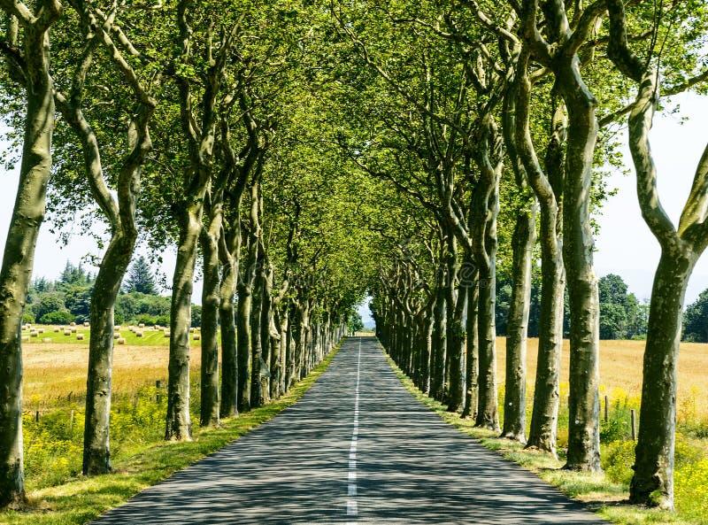 Strada vicino a Carcassonne (Francia) fotografie stock libere da diritti