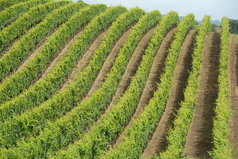 Strade del vino nel Langhe immagini stock