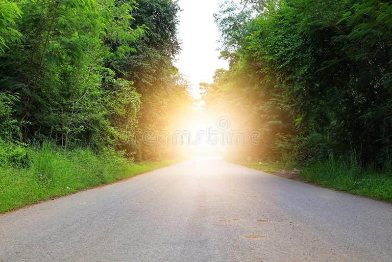 Strade di cemento, spazio libero e alberi verdi su entrambi i lati della foresta tropicale immagine stock libera da diritti