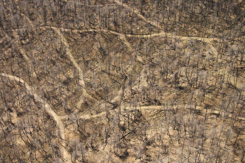 Strade non asfaltate in legno. fotografia stock libera da diritti