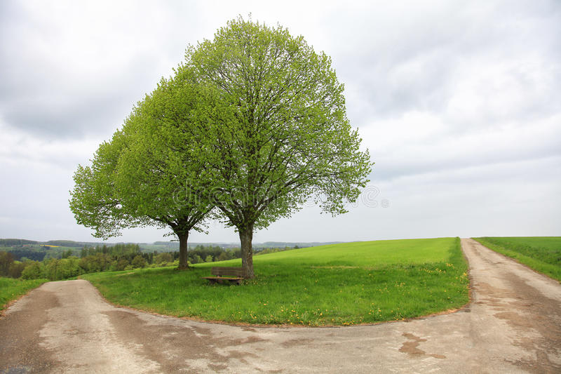 Strade trasversali con gli alberi fotografia stock libera da diritti