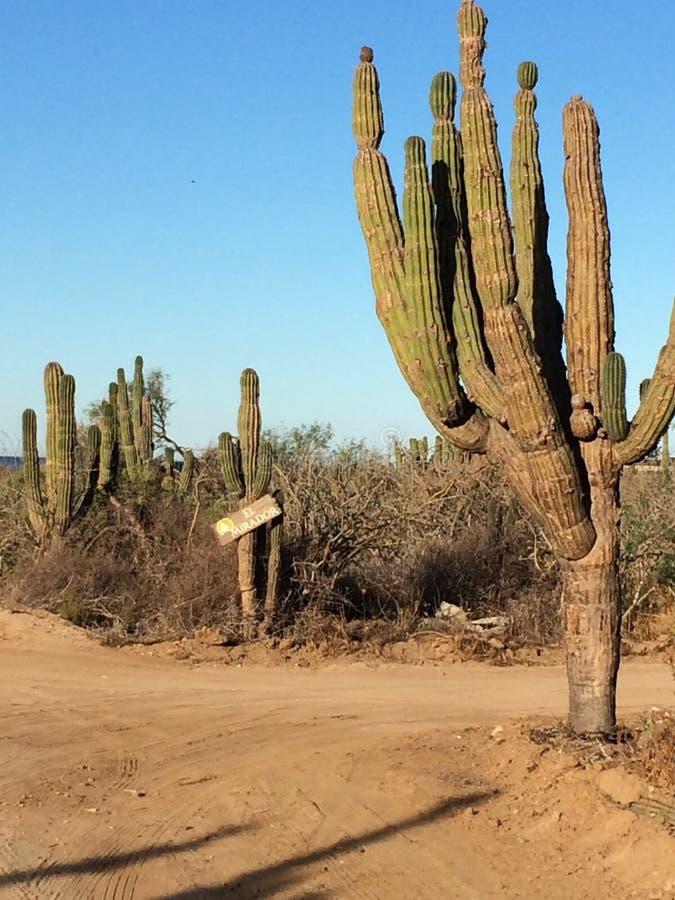 Strade trasversali nel Messico fotografie stock