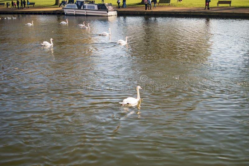 Straford sur des bateaux et des personnes d'avon de rivi?re avec le canard dans l'eau photo libre de droits