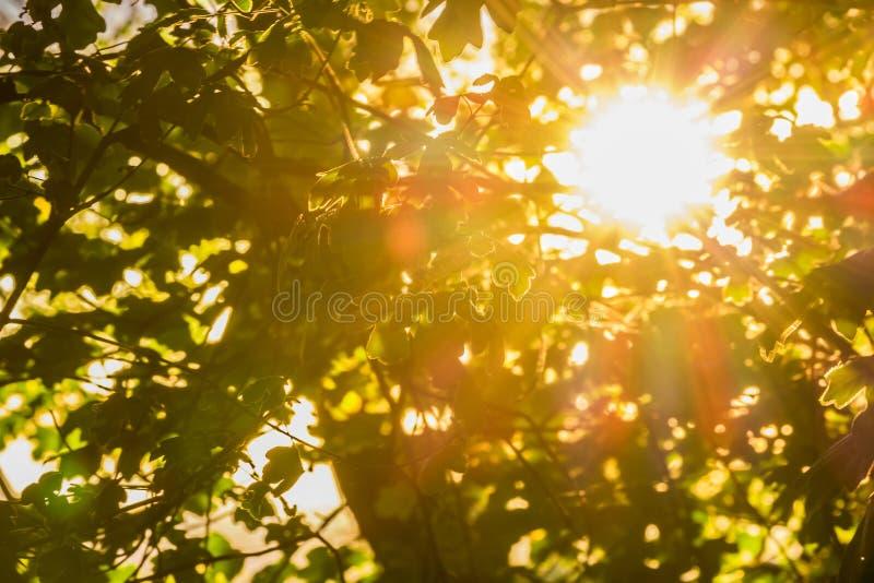 Strahlen der Sonne stockbilder