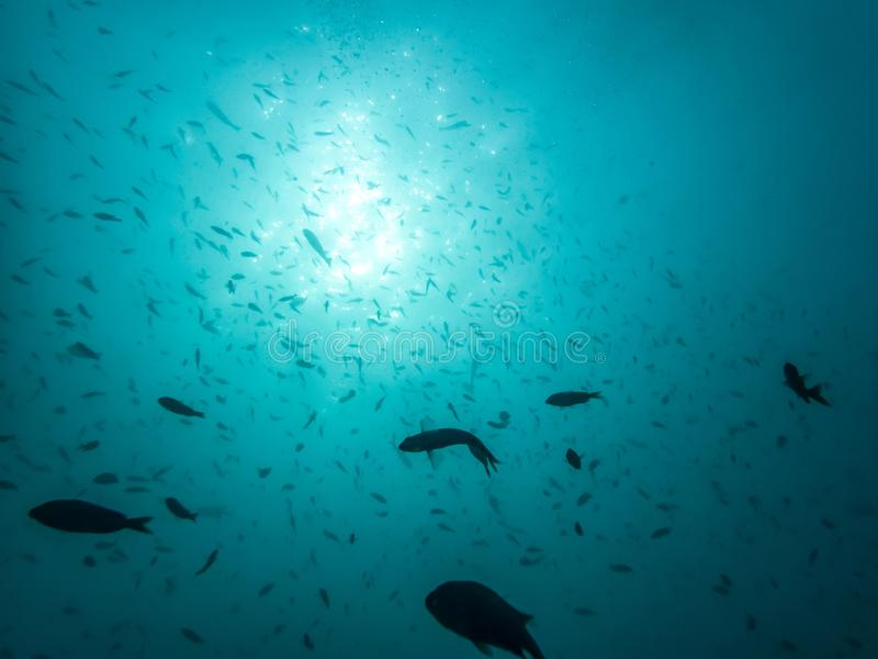 Strahlen des Lichtes von der Oberfläche des blauen Seeglanzes auf Fischschwarm L stockbilder