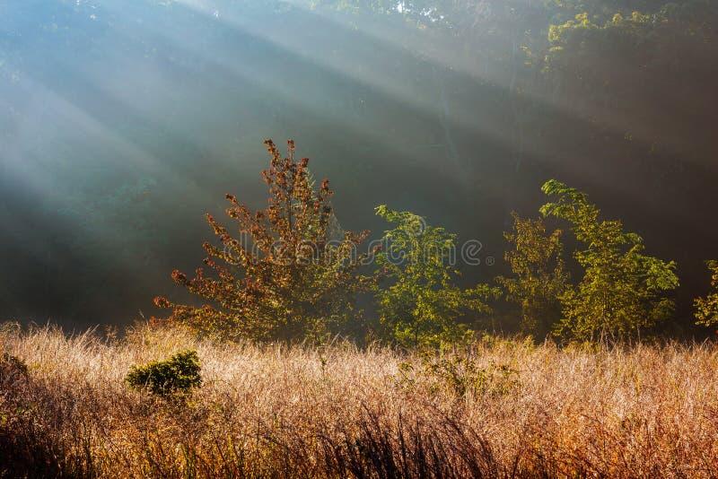 Strahlen des Sonnenlichts glänzen durch die Bäume auf einem nebeligen Morgen im Herbst stockbilder