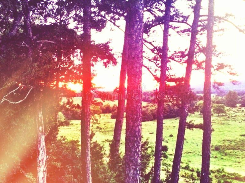 Strahlen des Sonnenscheins stockfotografie