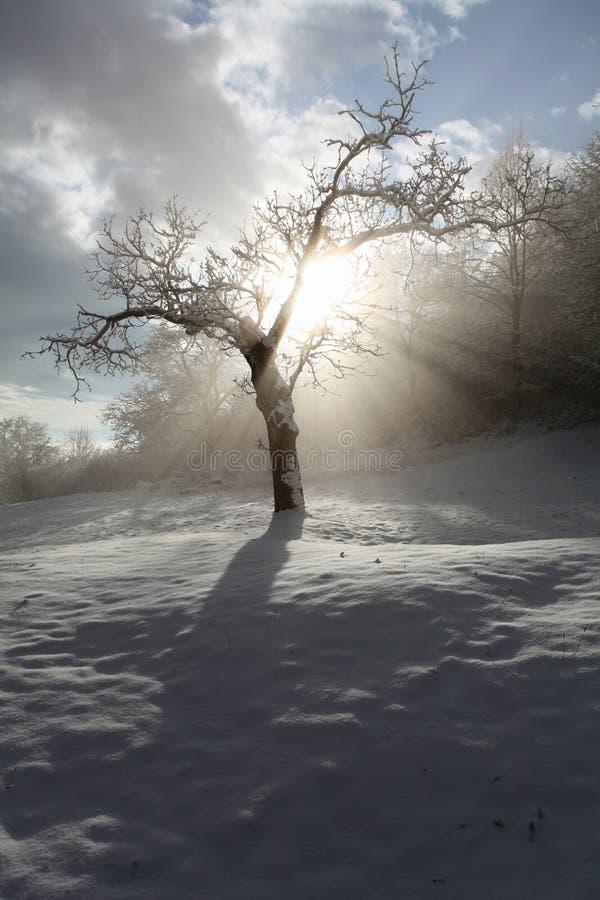 Strahlen und Baum stockfoto