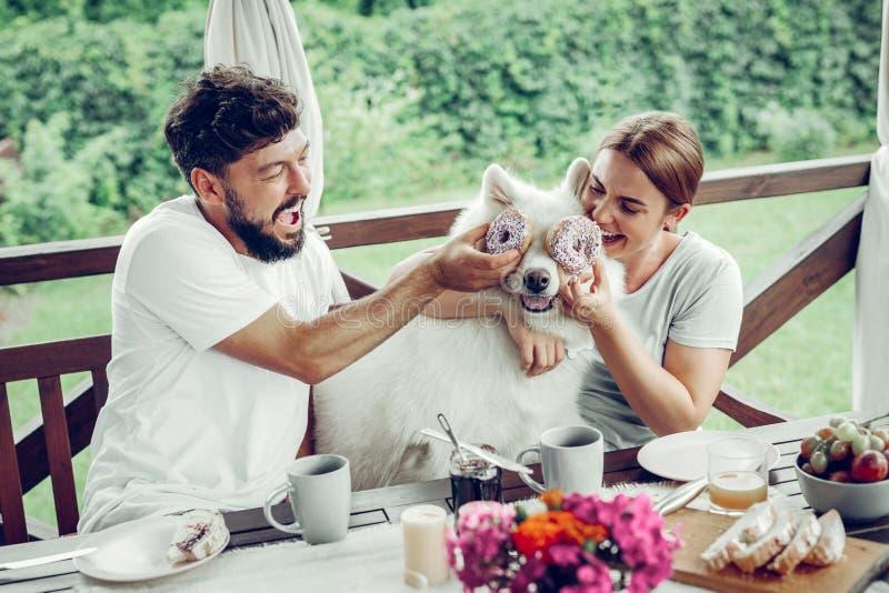 Strahlende Paare, die Lachen und das Vorlegen von Donuts ihrem Samoyed teilen stockbild