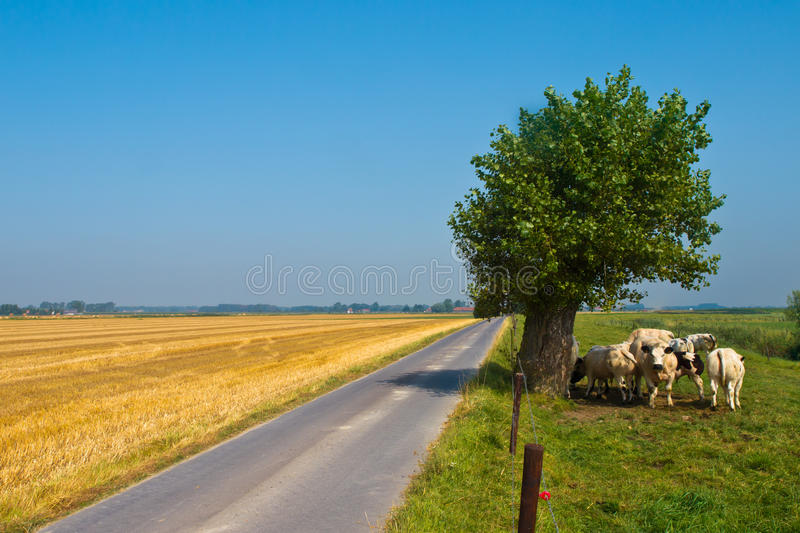 Straight Country Road royalty free stock images