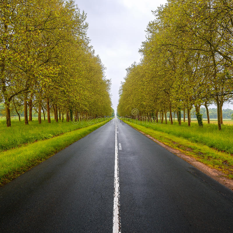 Free Straight Empty Wet Road Between Trees. Loire Valley. France. Stock Photos - 31501853