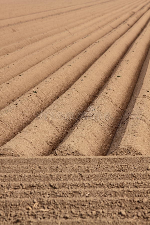 Download Straight farmland lines stock image. Image of line, soil - 19341279