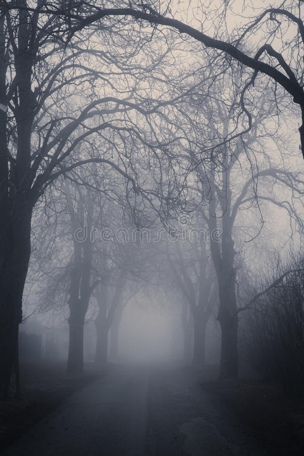 Straight foggy passage surrounded. By dark trees in late autumn royalty free stock images