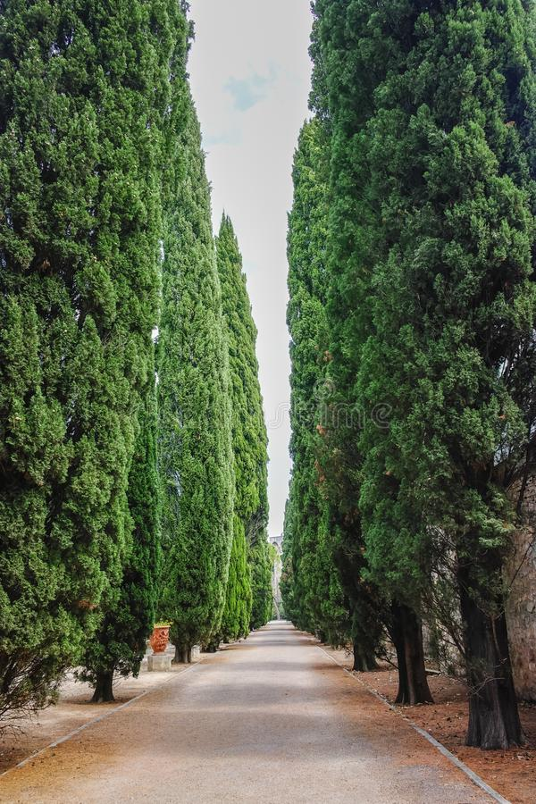 Straight lane with old high cypress plants, symbol of death and royalty free stock images