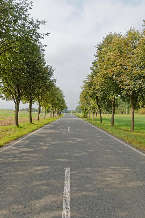 Straight road in the countryside. Straight road and trees in the countryside royalty free stock photos