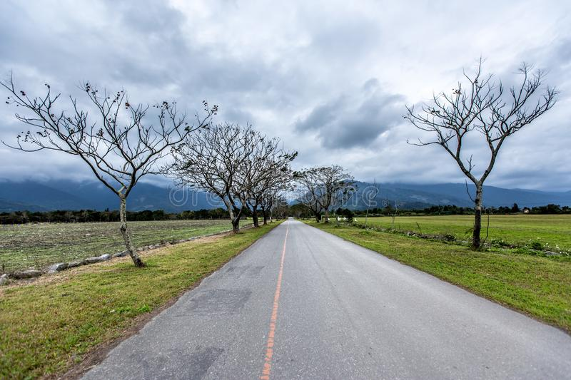 Straight road lined with trees royalty free stock image