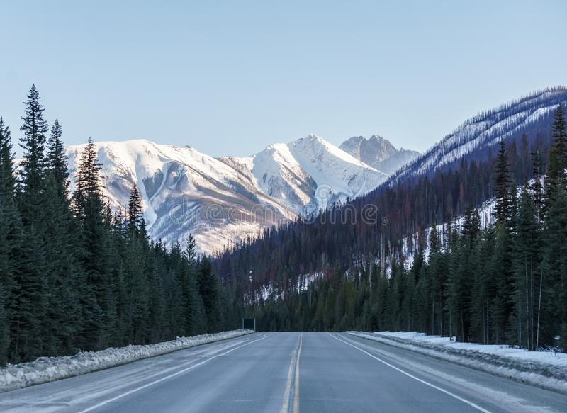 Straight road to the snow mountains in Alberta Canada. Blue sky asphalt landscape travel nature sunny highway horizon tree line outdoor rural transportation royalty free stock photo
