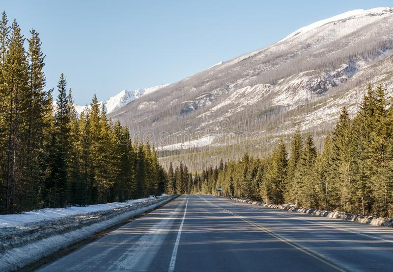 Straight road to the snow mountains in Alberta Canada. Blue sky asphalt landscape travel nature sunny highway horizon tree line outdoor rural transportation royalty free stock images