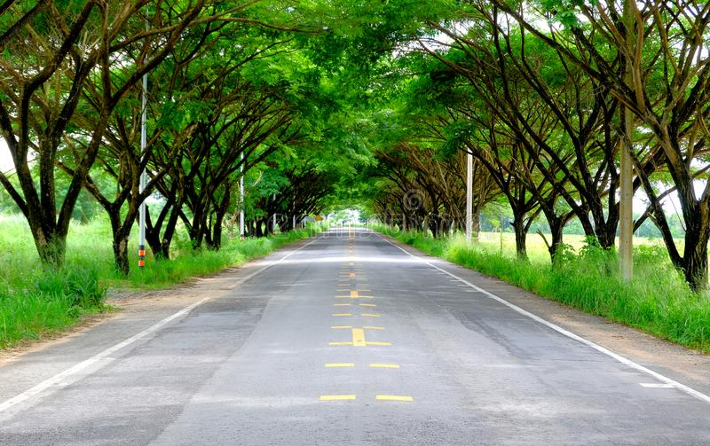 Straight road and tree tunnel in the countryside royalty free stock images