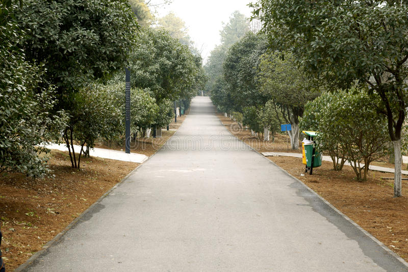 Download Straight road under trees stock photo. Image of outdoor - 17566660