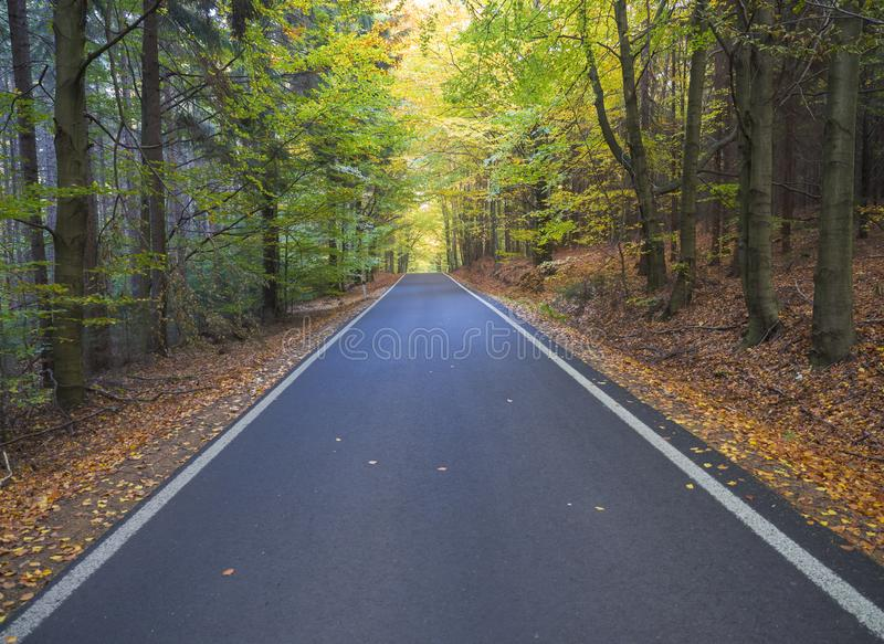Straight Stretch of a Asphalt road through colorful deciduous forest in the autumn with fallen leaves of oak and Maple stock photography