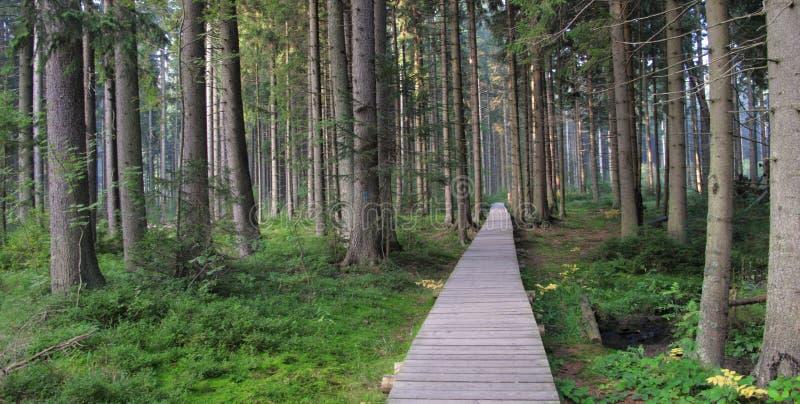 Strake to Rejvic nature reserve in Jeseniky stock images
