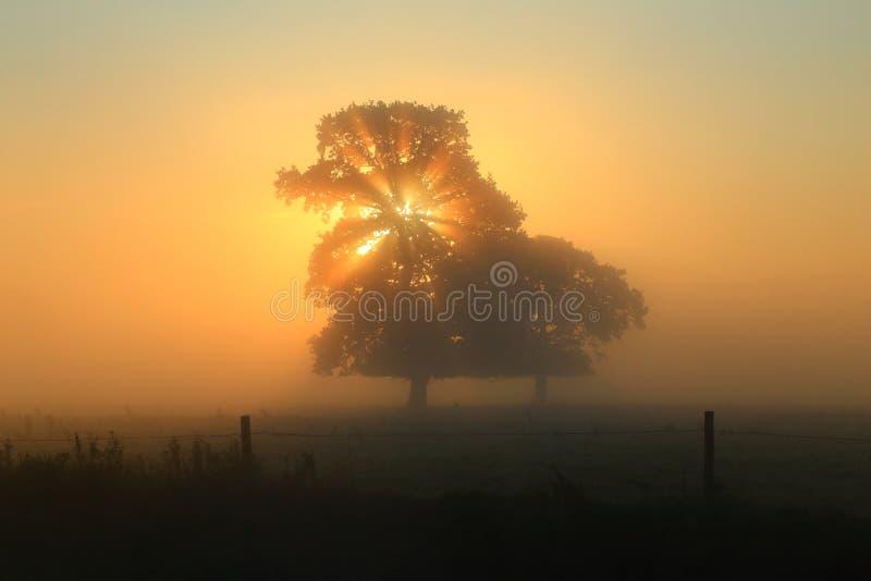 Stralen die van zonlicht door boom glanzen royalty-vrije stock afbeeldingen