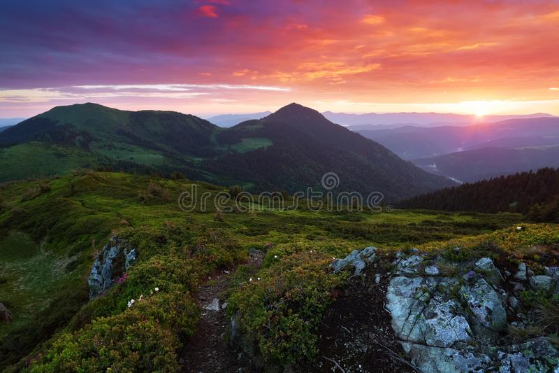 Stralen van de zondaling op het gazon met bloem Een mooi landschap met hoge eindeloze bergen, hemel met wolken en zonsondergang royalty-vrije stock foto's