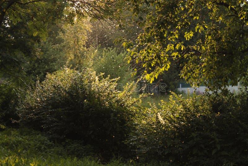 Stralen van licht achter de bomen in het park stock foto