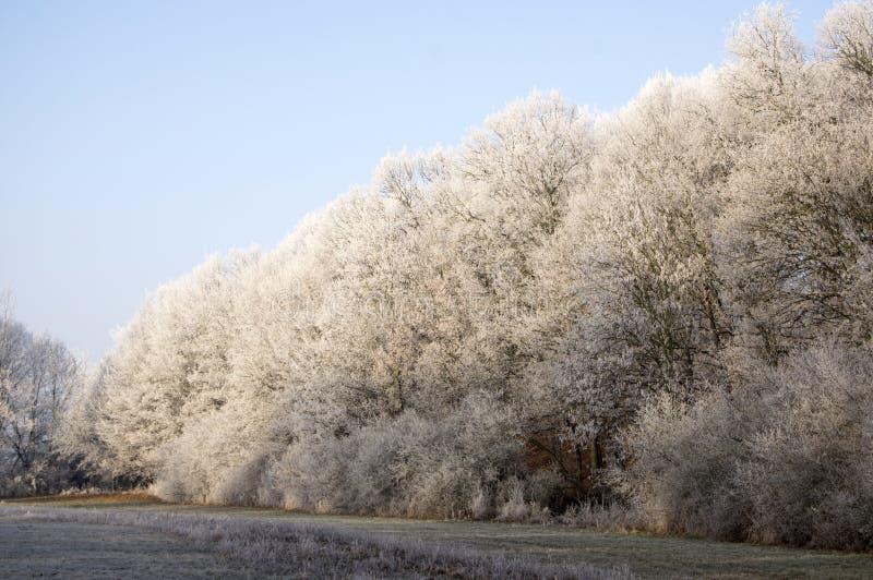 Stran Nemosicka, hornbeam δάσος - η ενδιαφέρουσα μαγική θέση φύσης στις χειμερινές θερμοκρασίες, παγωμένο δέντρο διακλαδίζεται στοκ φωτογραφία