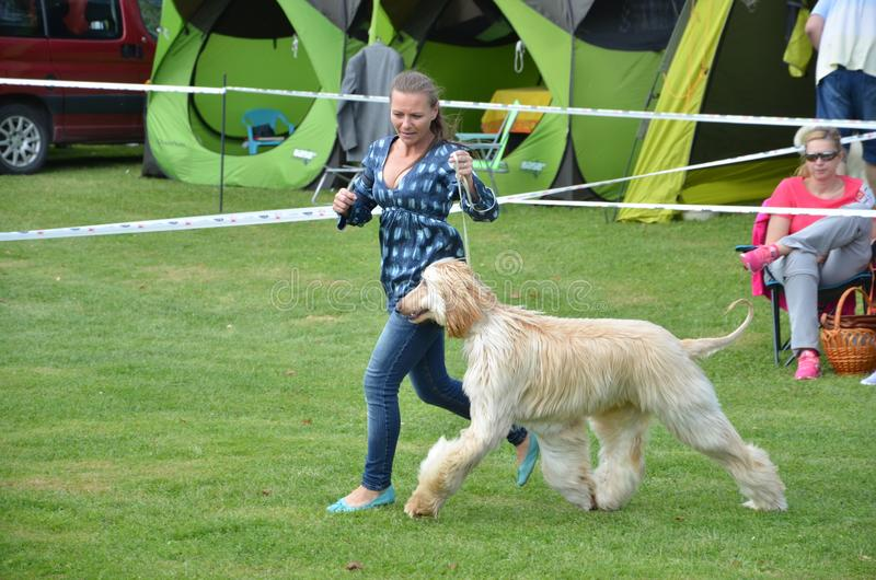 Stranavy, Slovakia - September 10, 2017: Woman runs with dog - Afghan hound within local dog show stock photography