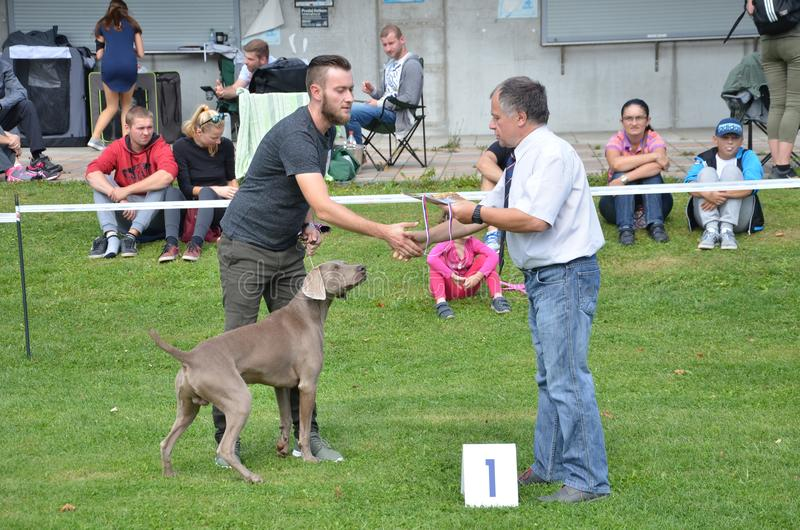 Stranavy Slovakien - September 10, 2017: Domaren gratulerar vinnaren av en kategori i lokal hundshow, hund som aveln är pekaren royaltyfria bilder
