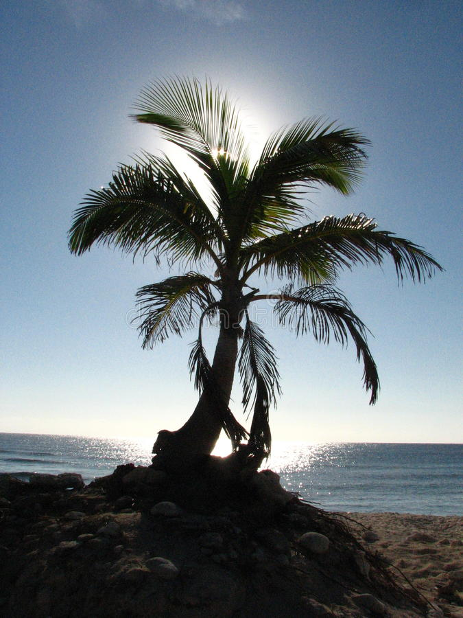 strandön gömma i handflatan paradistreen royaltyfria foton